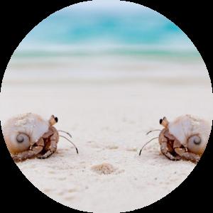 Ontmoeting twee heremiet krabjes op het strand